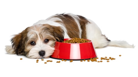 dog with bowl of food,vegan dog food,vegan cat food,vegan pet food